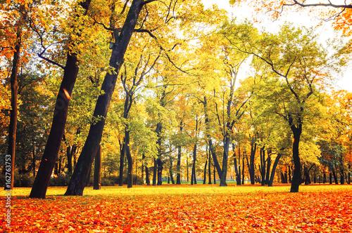 Staande foto Meloen Autumn park in cloudy weather - colorful autumn landscape