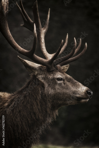 Stag III