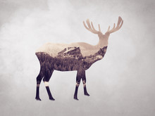 Digital Artwork Double Exposure Of Elk And Forest