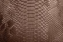 Background Of Crocodile Skin