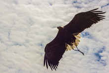 Aquila Che Vola, In Controluce