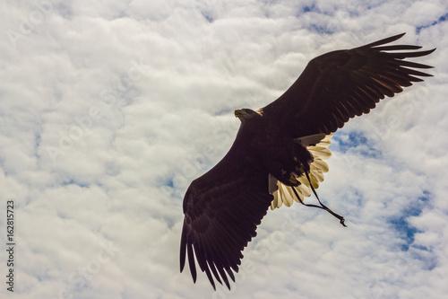 Photo Aquila che vola, in controluce