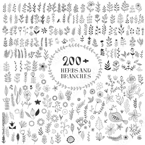 Collection of herbs, branches, flowers. Hand drawn. Vector.