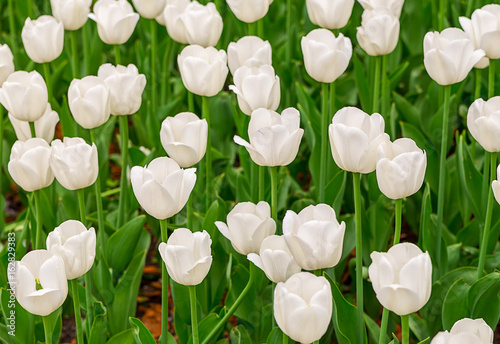 floral-background-white-brightly