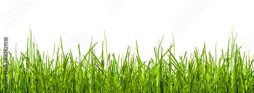 Valokuva  gras, wiese, grashalme vor weißem hintergrund
