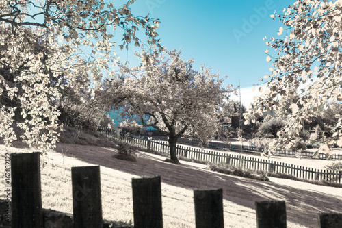 Fotografering  Infrared shot of summer garden with trees and fence