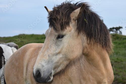Photo  Horse Denmark Europe