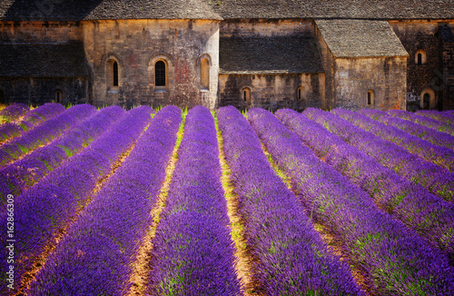 Fotobehang Snoeien Abbey Senanque and blooming Lavender field flowers, France, retro toned