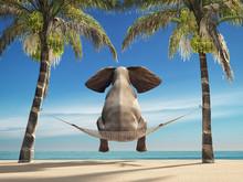 An Elephant Sitting In A Hammock