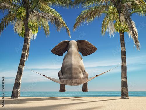 Photo  An elephant sitting in a hammock