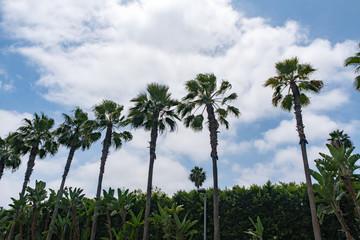Fototapeta na wymiar Palm Trees