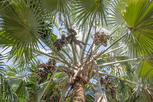 Fotografía Palm