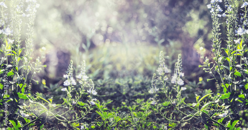 Spoed Foto op Canvas Natuur Summer nature background with wild plant and flowers, banner