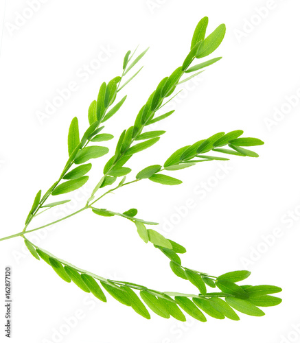 Fototapety, obrazy: Green branch with leaves on white background