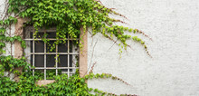 Old Window With A Lattice Covered With Grape Leaves, A Minimalistic View With A White Textured Wall Background, Walldorf, Germany.