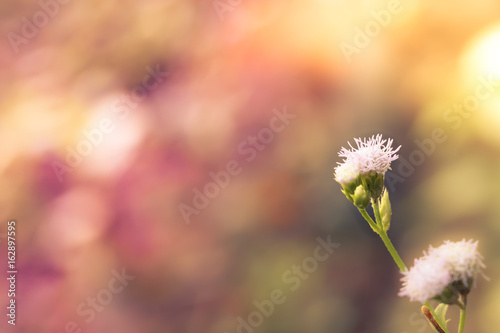 Foto op Canvas Madeliefjes Meadow flowers in early sunny morning, Vintage autumn