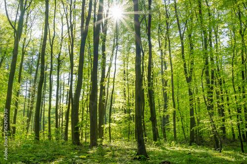 Garden Poster Forest Sonne im Laubwald