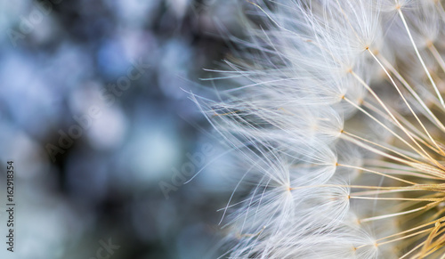 Türaufkleber Makrofotografie Sementes de dente-de-leão.