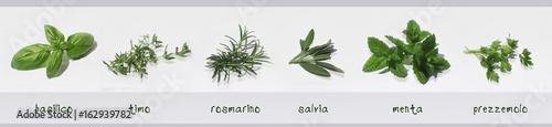 Erbe aromatiche fresche. Spezie fresche con relativi nomi