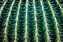 Prickly Pear Cactus Close Up Abstract Background