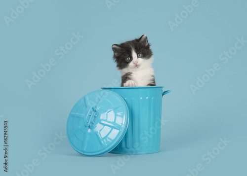 Cute 6 weeks old black and white baby cat in a blue trashcan on a blue backgroun Canvas Print
