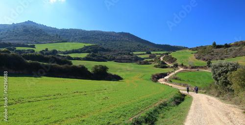 Pilgrims walking through endless green fields under the sun of a beautiful spring morning, Camino de Santiago, Navarra, Spain.