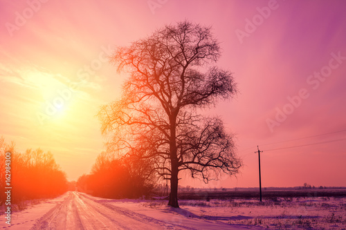Photo Stands Candy pink Evening in countryside, road covered with snow at sunset light