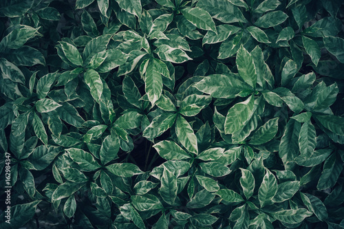 Green leaves background design.Flat lay.Top view of leaf.Nature concept