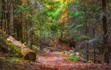 In The Forest. Modern Oil Painting Illustration Art