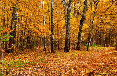 Tuinposter Weg in bos Autumnal park
