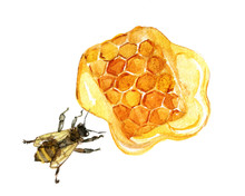 Honeycomb With Bee Isolated On...