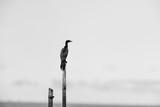 Czarno-białe odcienie w minimalistycznej fotografii - 163001382