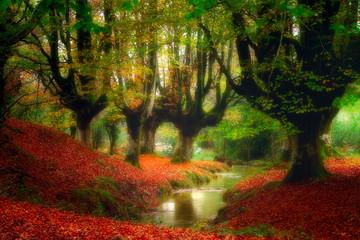 Fototapeta Jesień forest with a stream
