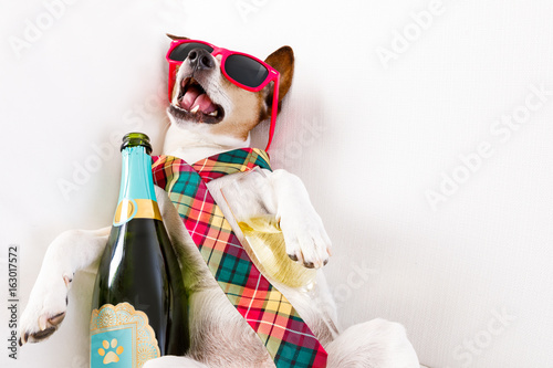 Canvas Prints Crazy dog drunk hangover dog