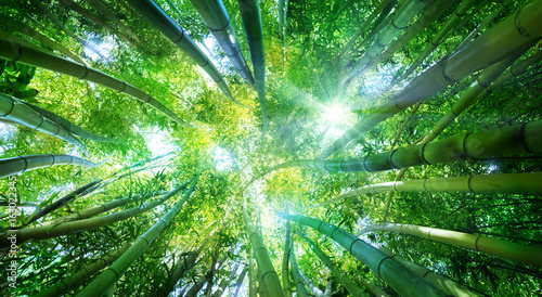Photo sur Toile Bambou Bamboo Forest With Sunlight