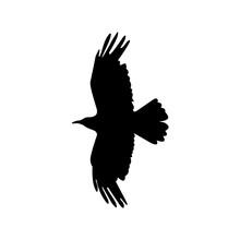 The Crow Icon. Bird And Flight, Eagle Symbol. Flat Vector Illustration