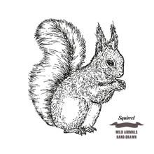 Forest Animal Squirrel. Hand D...