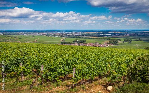 In de dag Lime groen village viticole