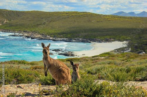 Spoed Foto op Canvas Kangoeroe Kängurus am Strand
