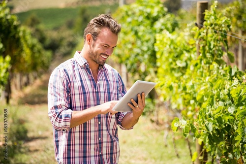 Fotografia  Man using digital tablet at vineyard