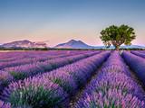 Fototapeta Landscape - Lavandes 5