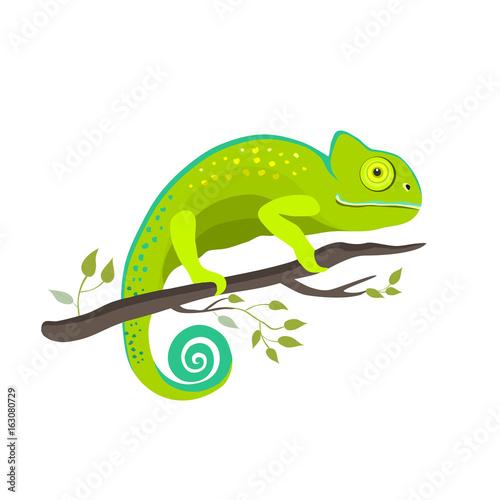 Chameleon icon. Cartoon illustration of walking chameleon vector for web © lilam8