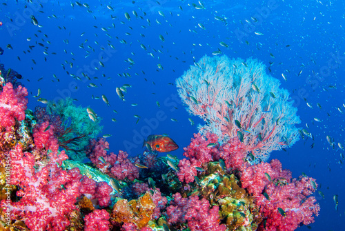Foto op Aluminium Onder water Similan,North Andaman Sea