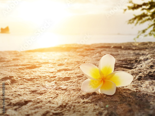 Wall Murals Plumeria Frangipani ,Plumeria flower on the floor with sunset background at the sea beach