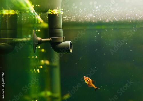 Photo aquarium life