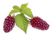 Loganberry Fruit Or Red Blackb...