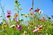 Leinwandbild Motiv Grußkarte - bunte Blumenwiese - Sommerblumen