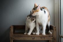 Mother Cat Licking Her Kitten