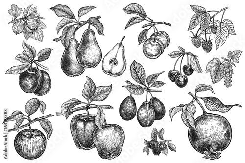 Fotografía Berries and fruit big set.