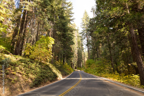 Poster Parc Naturel Sequoia National Park